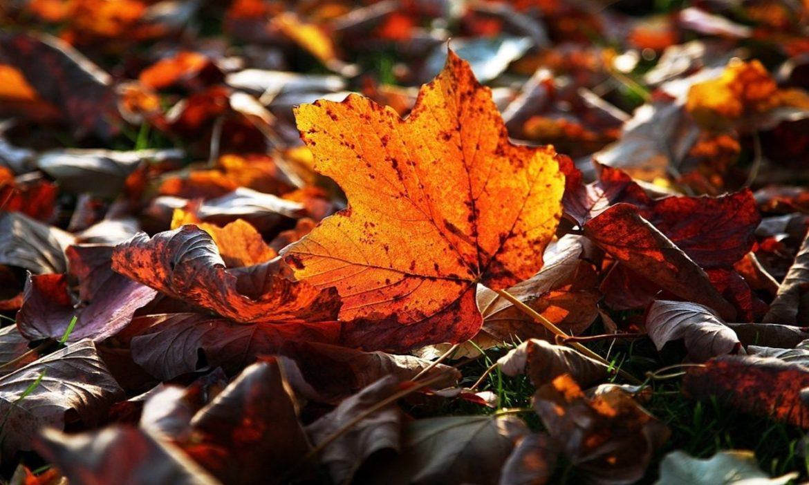 autumnal-equinox-2020-why-do-leaves-change-colors-fall