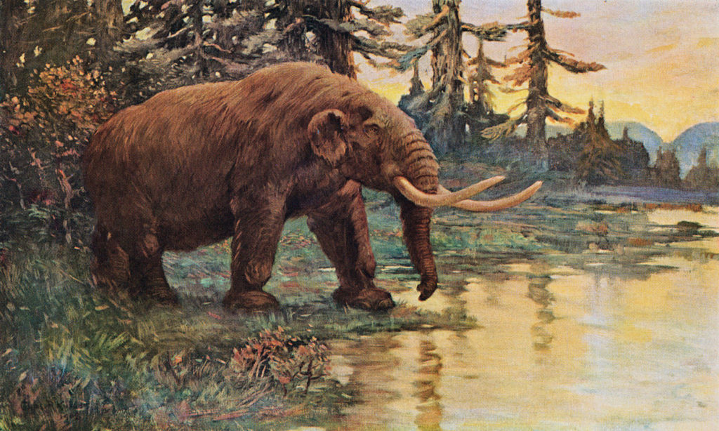 teen-discovers-mastodon-tooth-over-10000-years-old-missouri-river