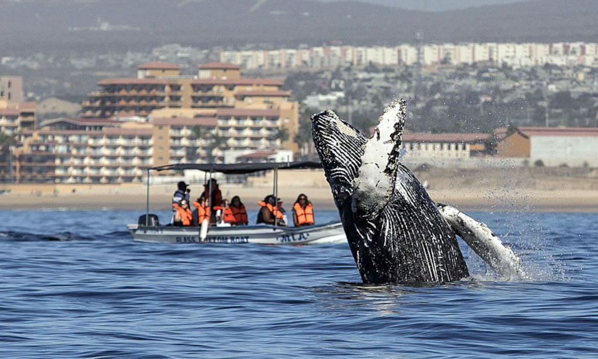 video-humpback-high-fives-shocked-whale-watcher