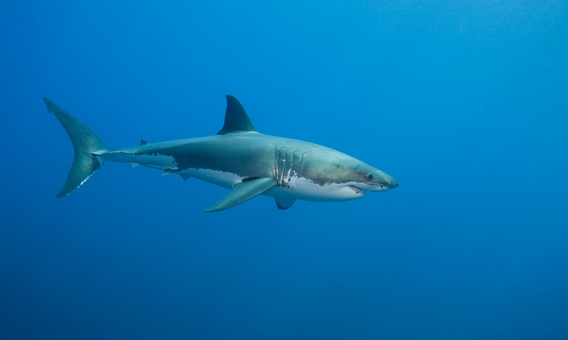 watch-beachgoers-capture-footage-of-nearly-13-foot-long-shark-dangerously-close-to-shore