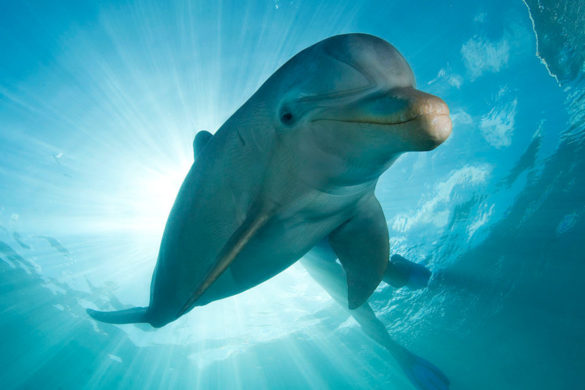 meet-the-robot-dolphin-may-replace-theme-park-captive-animals