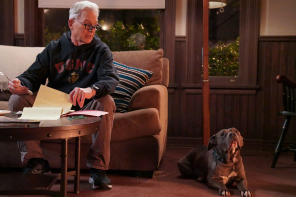 ncis-does-breakout-star-dog-lucy-belong-mark-harmon